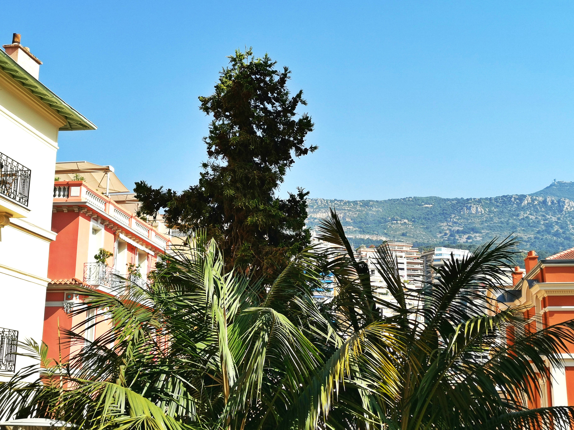 CONDAMINE, - 1/2 bedrooms flat ideal for Legal/Medical Profession - Offices for sale in Monaco